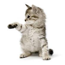 Jak sprawić, żeby kot cię polubił?