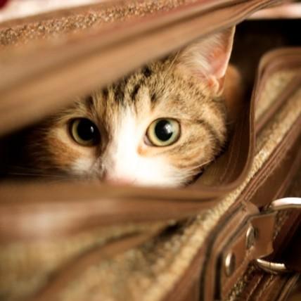 Jak postępować z kotem w podróży?