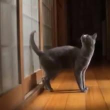 Jak zamontować w domu drzwiczki dla kota?
