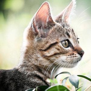 Co mówią kocie uszy