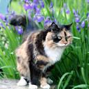 Jak trzymać obce koty z dala od ogrodu?
