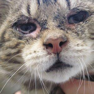 Jak postępować, gdy kot choruje na koci katar?