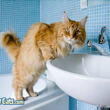 Jak zrobić kotu kąpiel?