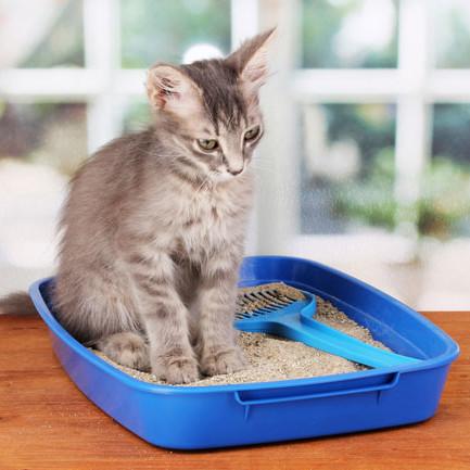 Jak przeprowadzić trening czystości dla kota?
