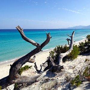 Plaża Saleccia – Korsyka
