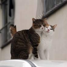 Dlaczego warto wysterylizować kota?