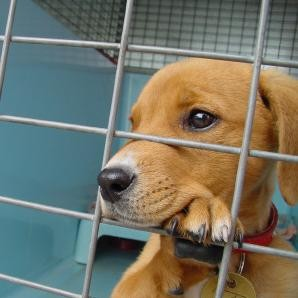 Adopcja psa ze schroniska – wskazówki i rady