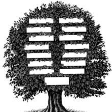 Zasady tworzenia drzewa genealogicznego