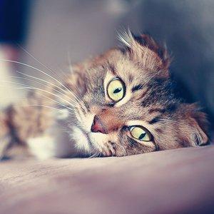 Po czym poznać, że kot jest chory?