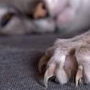 Jak przyzwyczaić kota do jego drapaka?
