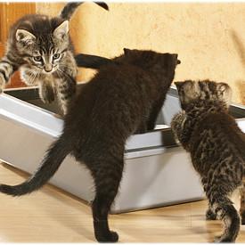 Jaki żwirek wybrać dla swojego kota?