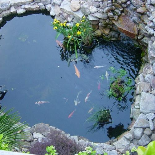 Jak zadbać o oczko wodne we własnym ogrodzie?