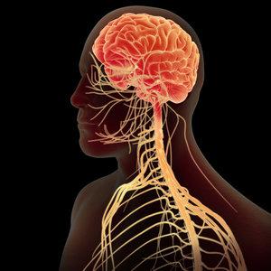 Jak pielęgnować układ nerwowy?