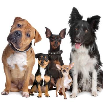 Jak dobrze wybrać psa?