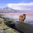 Co warto zobaczyć w Boliwii?