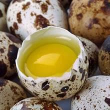 Jakie są zalety przepiórczych jaj?