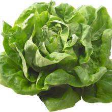 W jaki sposób zachować świeżość sałaty?