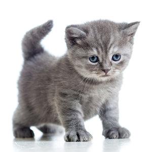 Czym należy karmić kocięta?