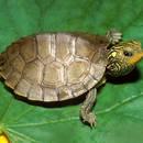 Jak dbać o żółwia?