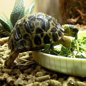 Dieta dla żółwia