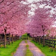 Jak sobie poradzić z przesileniem wiosennym?