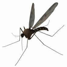 Jak przygotować naturalny środek na komary?