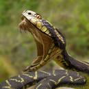 Jak postępować w przypadku ukąszenia węża?