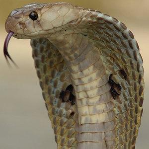 Jak działa jad węża?
