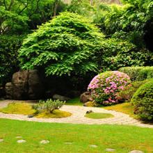 Jak odpowiednio zadbać o swój ogród?