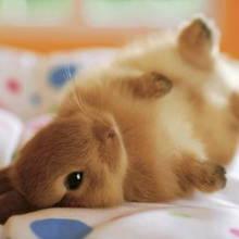 Karmienie królika – podstawowe zasady