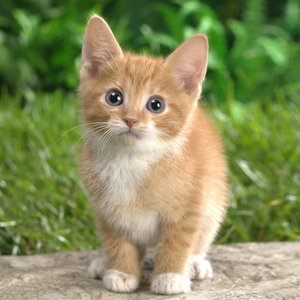 Jak należy dbać o kota?
