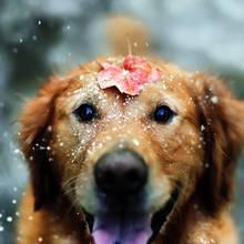 Jak przygotować psa do zimy?