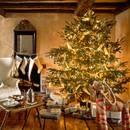 Jak przedłużyć życie świątecznej choinki?