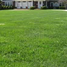 Zasady pielęgnacji trawnika po zimie