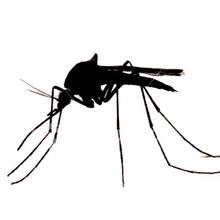 Jak przygotować nalewkę przeciwko komarom?