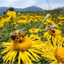 Unikaj pszczół
