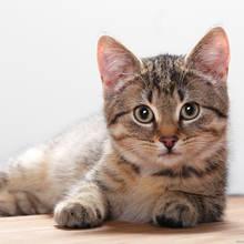 Jak poprawnie karmić kota?