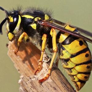 Których owadów należy unikać?