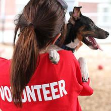 Co możesz zrobić dla bezdomnych zwierząt?