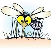 Jak uniknąć ukąszeń komarów?