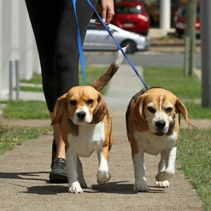 Idź z psem na spacer