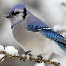 Zasady karmienia ptaków w czasie zimy