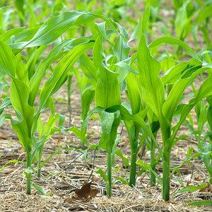 Wysiew nasion do gruntu