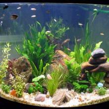 Zakładanie akwarium w pięciu krokach