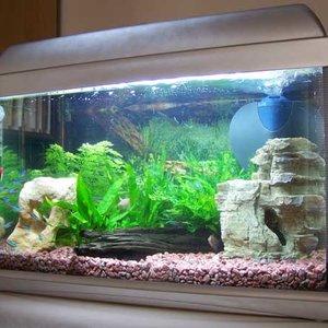 Zapewniamy równowagę biologiczną w akwarium