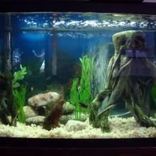 Co warto wiedzieć o urządzaniu akwarium?