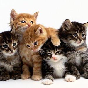 Przyzwyczajenie kota