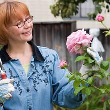 Co trzeba wiedzieć o cięciu róż?