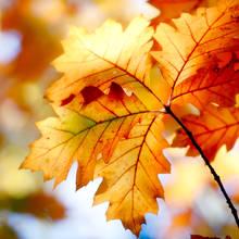 Duszki z jesiennych liści – jak zrobić?