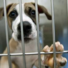Czym się kierować podczas adopcji psa ze schroniska?